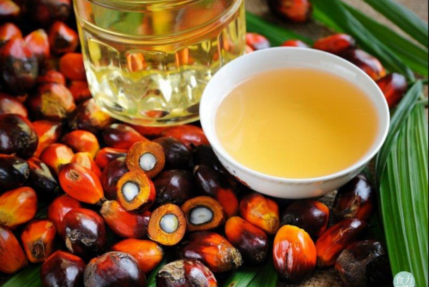 馬來西亞棕櫚油巨頭 IOI 協助美國調查強迫勞動索賠