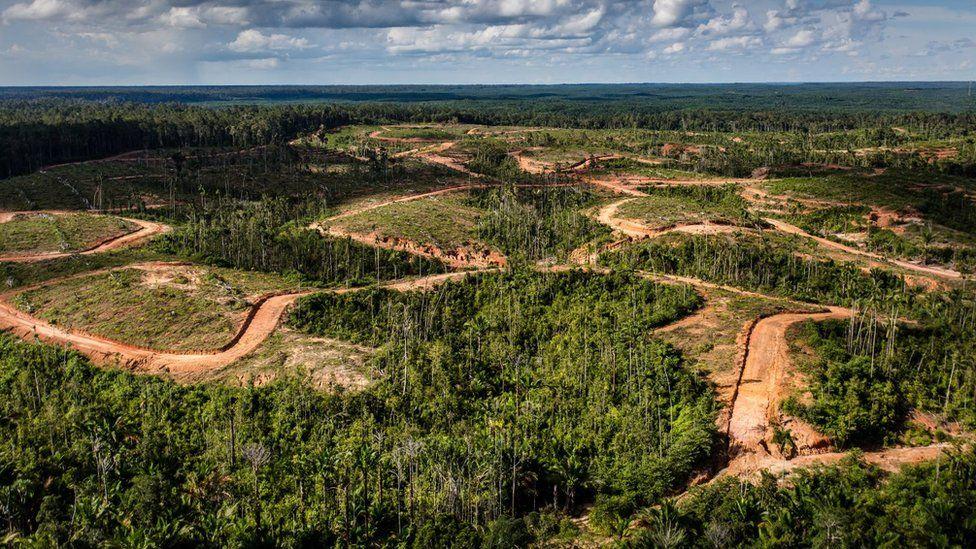 Korindo:韓國棕櫚油巨頭被剝奪了可持續發展地位