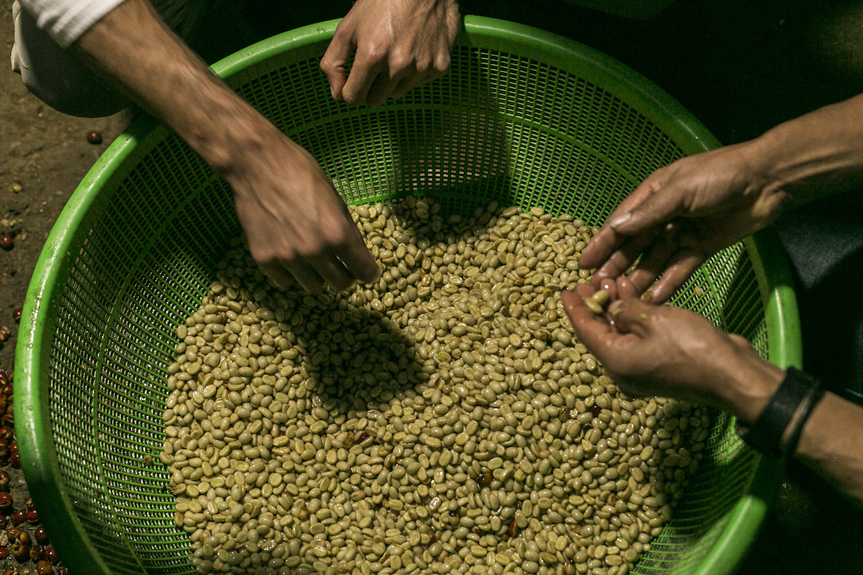 墨西哥城烘焙布納通過保護生態系統提高質量