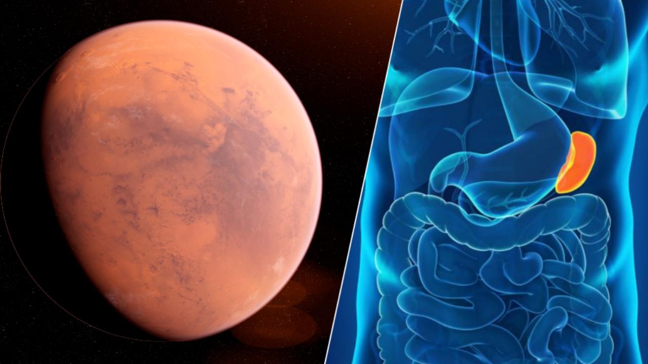 火星飛行前的脾臟爭議