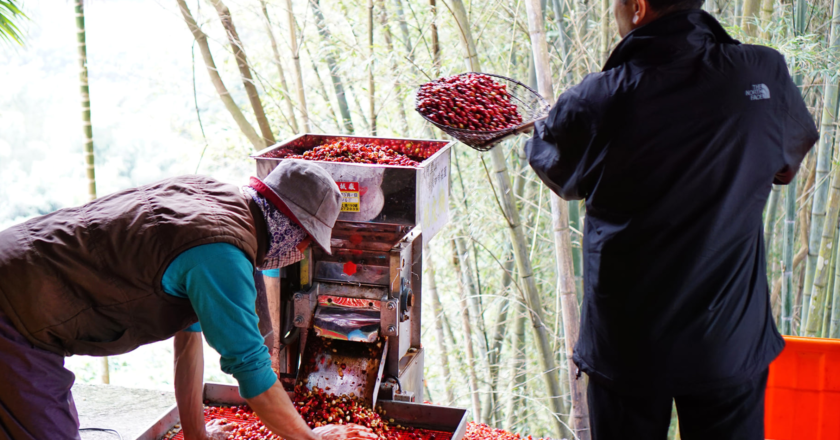 首屆台灣私人收藏拍賣咖啡拍品每磅售價 500 美元