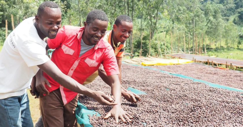 TechnoServe 發布埃塞俄比亞阿拉比卡咖啡指南以促進森林保護